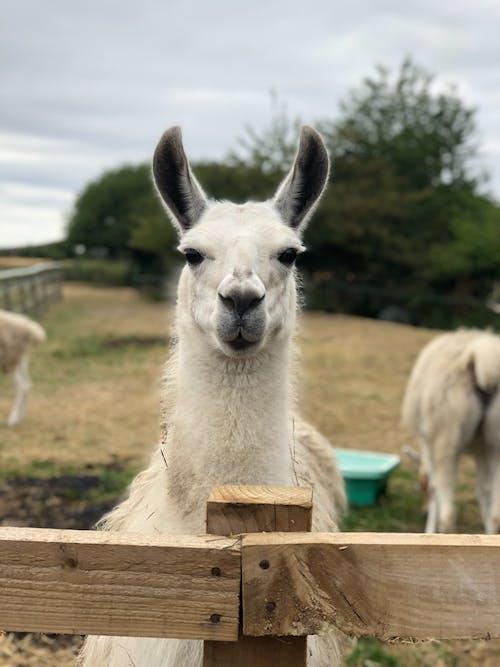 Free stock photo of animal, animal photography, farm