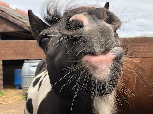 Free stock photo of animal, animal photography, equine