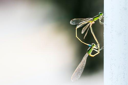 곤충, 매크로, 벌레, 실잠자리의 무료 스톡 사진