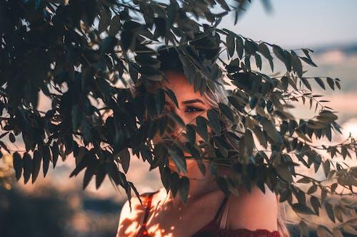 รูปภาพสิทธิ์แบบเหมาจ่าย ของ คน, ต้นไม้, บุคคล, ผู้หญิง