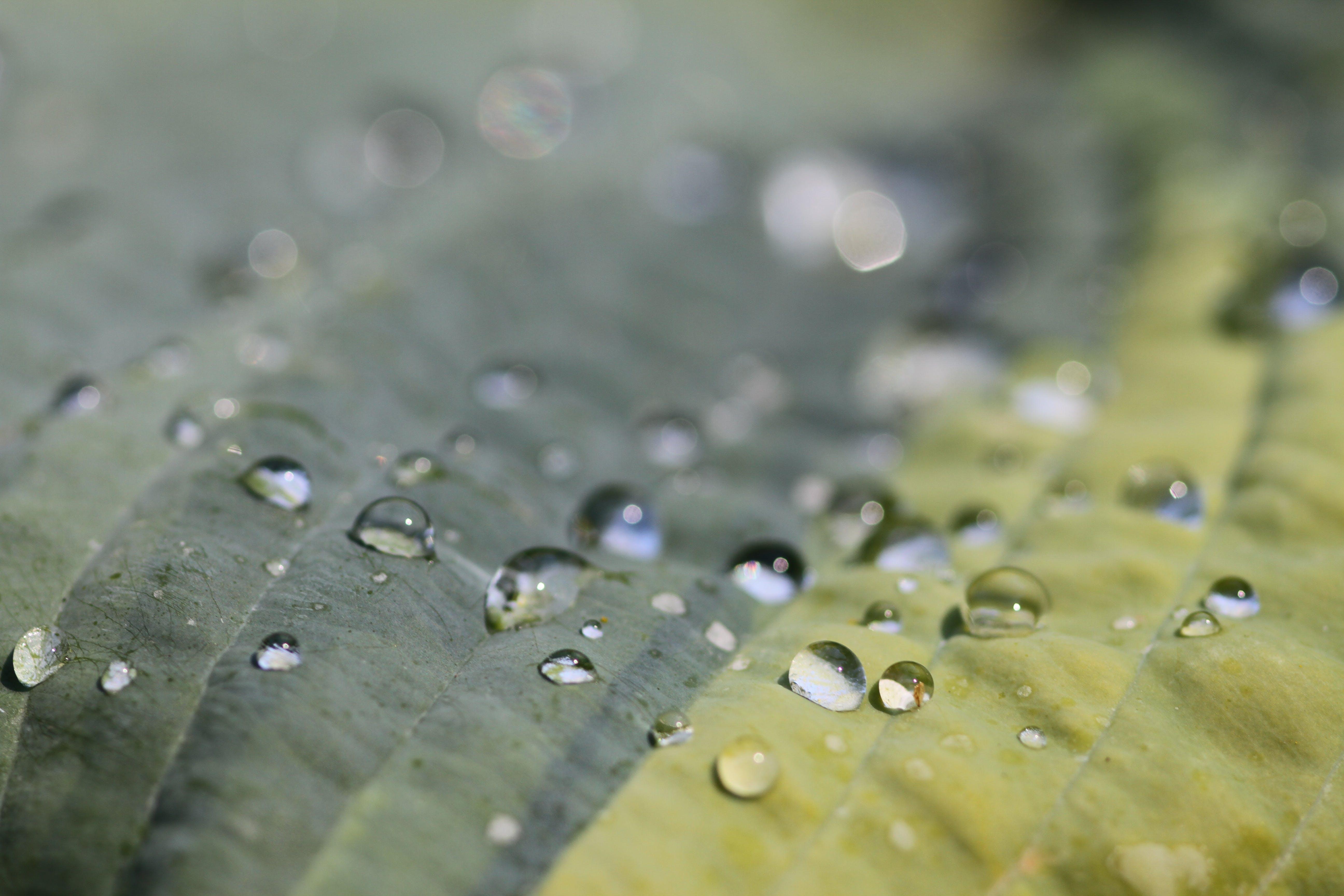 Free stock photo of after the rain, leaf, macro, macro photo