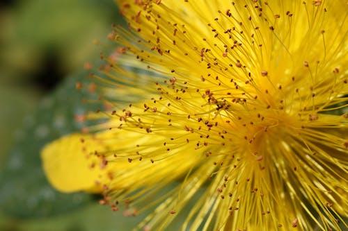 Gratis lagerfoto af blomst, close-up, flora, gul