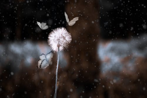 #butterfly #liontoth #manipulation #exclusivestyle 的 免费素材照片