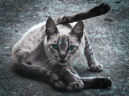 Photos gratuites de animal, animal de compagnie, animaux de compagnie, chat