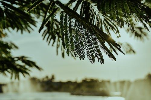 Darmowe zdjęcie z galerii z gałąź, makro, roślina