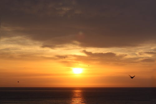 Gratis lagerfoto af flyrejse, gylden, gylden sol, h2o