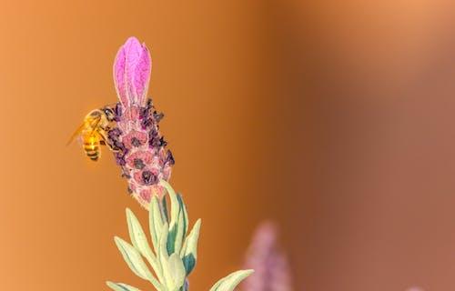 宏觀, 小蟲, 授粉, 昆蟲 的 免费素材照片