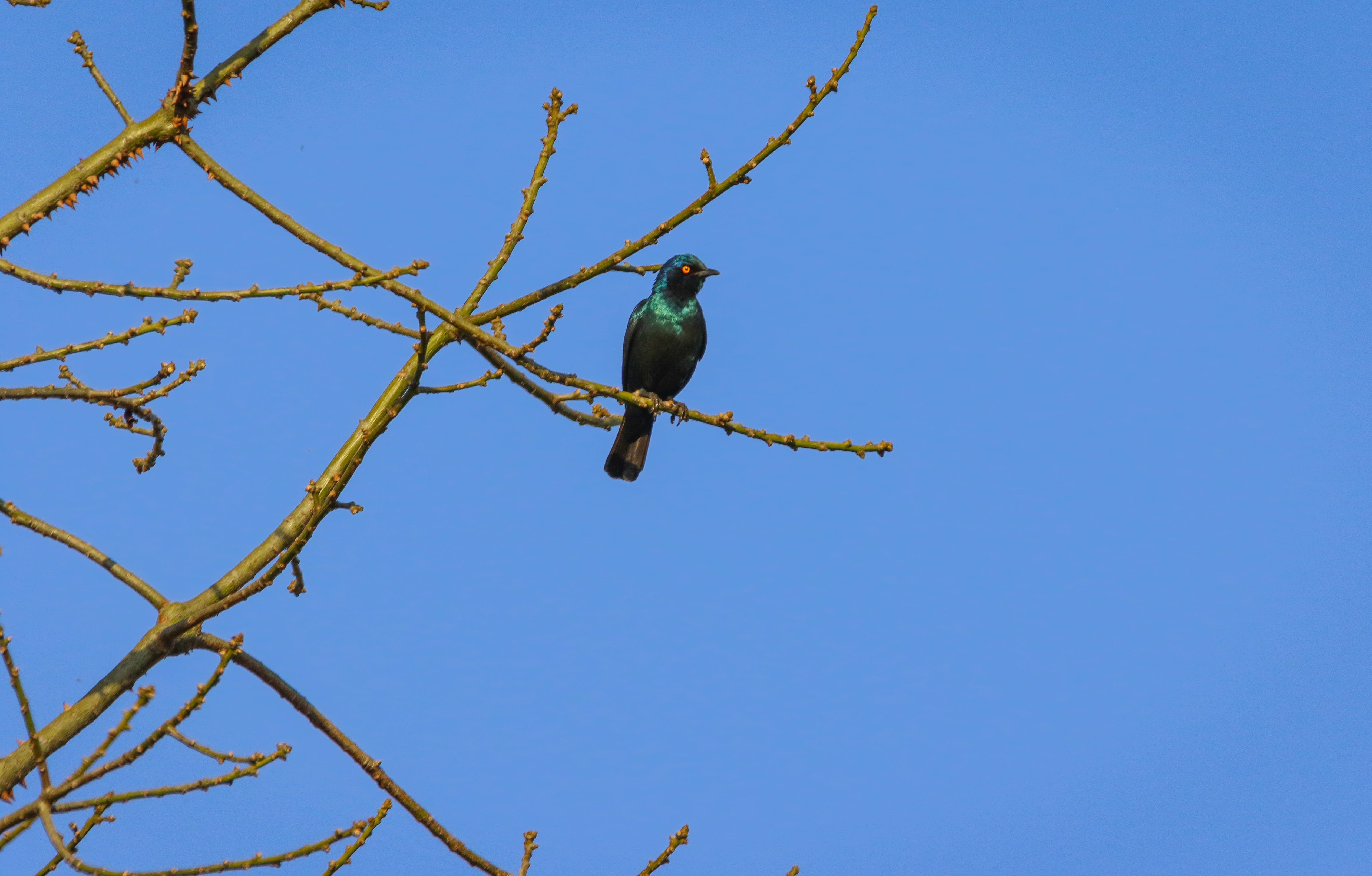 Free stock photo of nature, bird, tree, blue sky