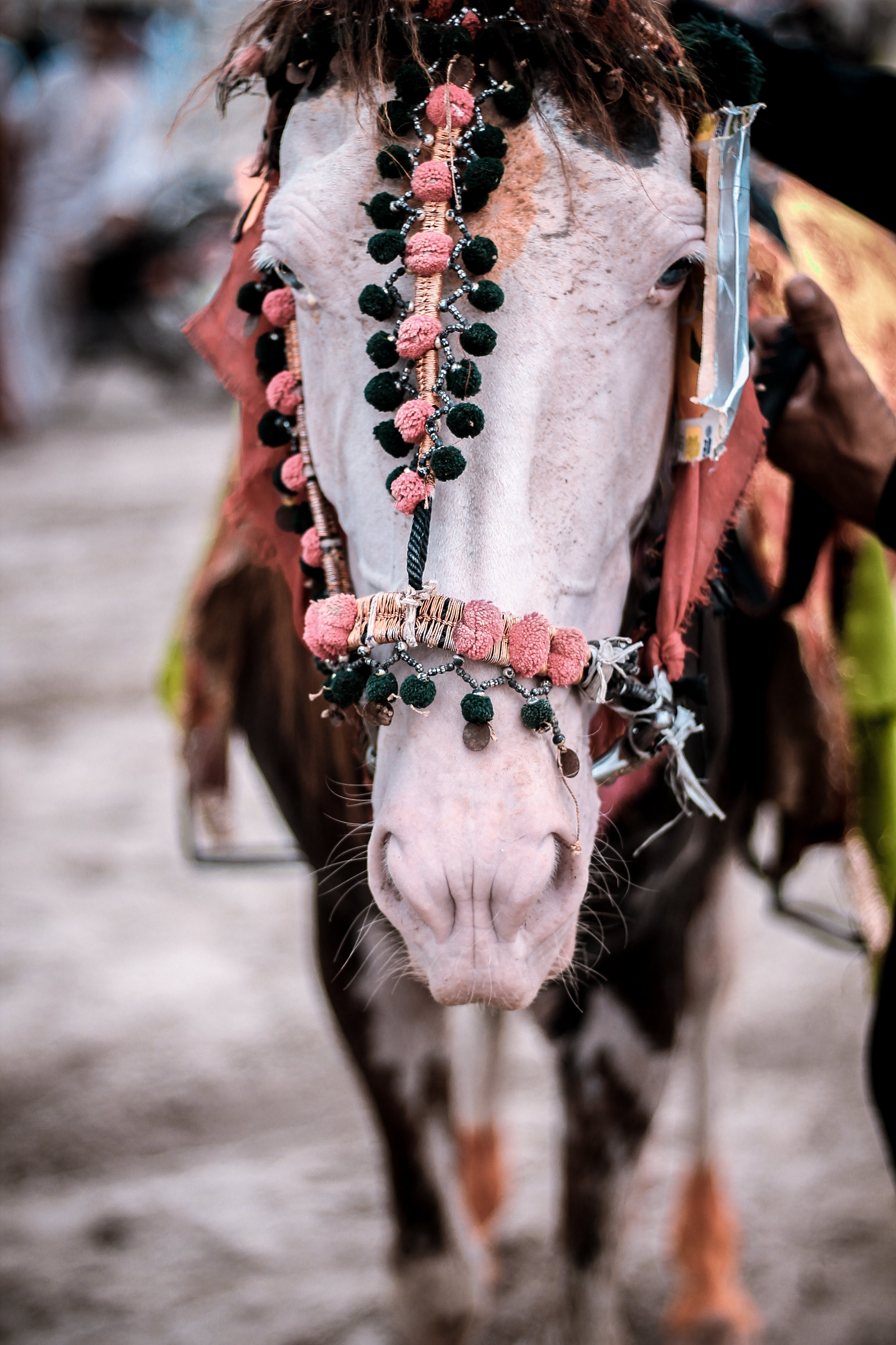 Closeup Photo of Horse Wearing Accessories