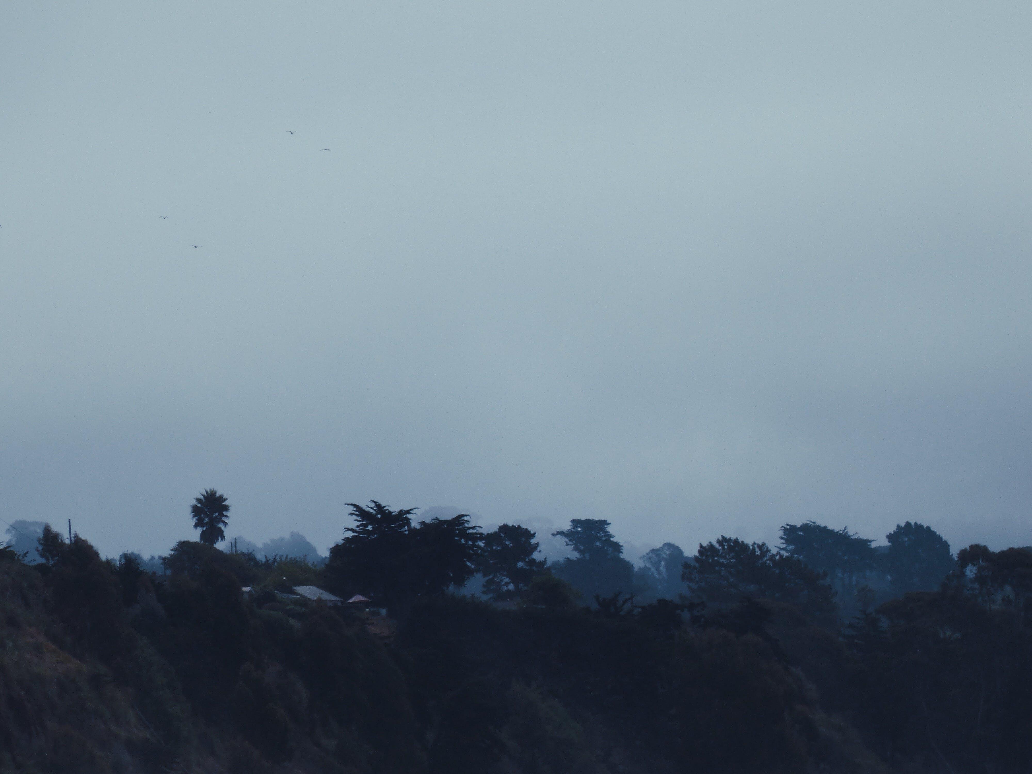 Free stock photo of brown, clouds, dark, fog