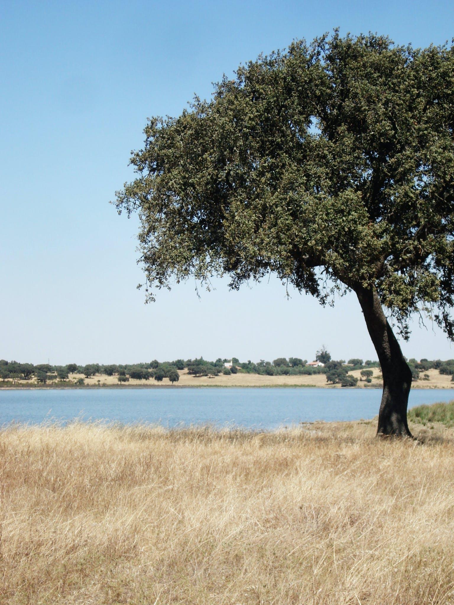 Free stock photo of landscape, summer, tree