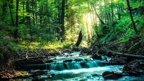 Foto profissional grátis de água, árvores, cênico, corrente