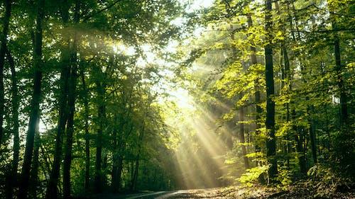 Foto profissional grátis de árvores, floresta, luz do sol, madeiras