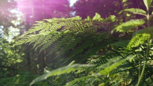Foto profissional grátis de ecológico, meio ambiente, planta, samambaia