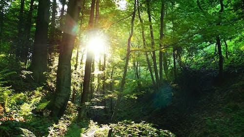 Foto profissional grátis de árvores, floresta, floresta tropical, luz do sol