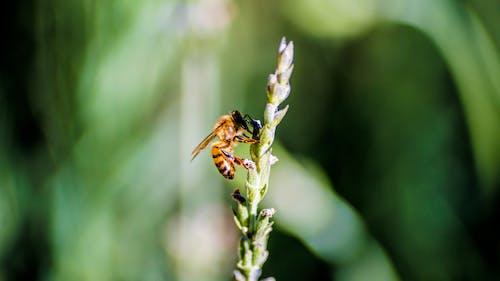Gratis stockfoto met bijen, fabrieken, honingbij, honingbijen