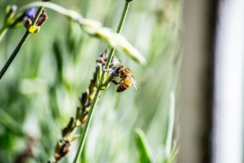 Gratis stockfoto met bestuiving, bij, bloemen, blurry achtergrond
