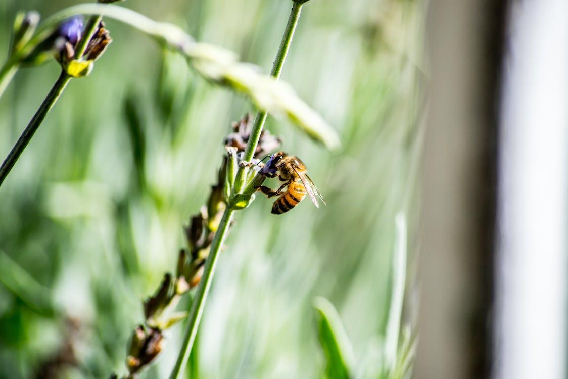곤충, 꿀벌, 밝은