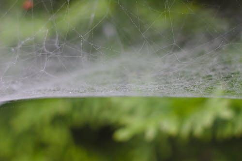 Бесплатное стоковое фото с паутина, роса