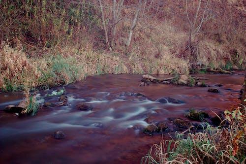 Бесплатное стоковое фото с поток