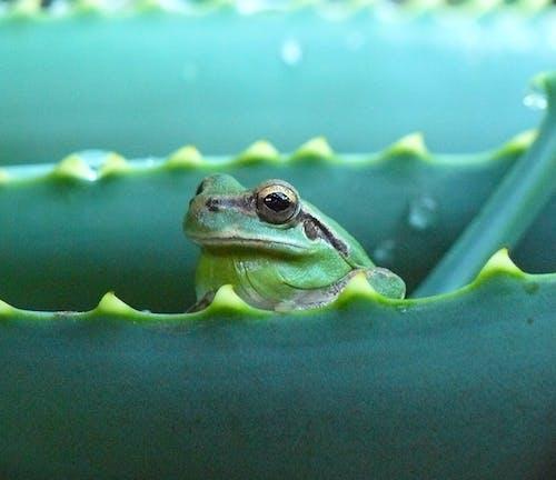 Бесплатное стоковое фото с лягушка