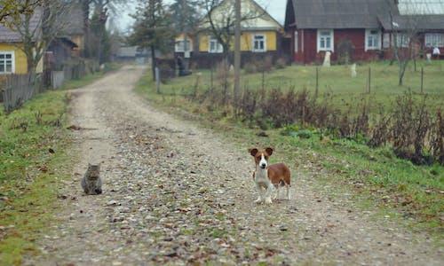 Бесплатное стоковое фото с кошка, собака