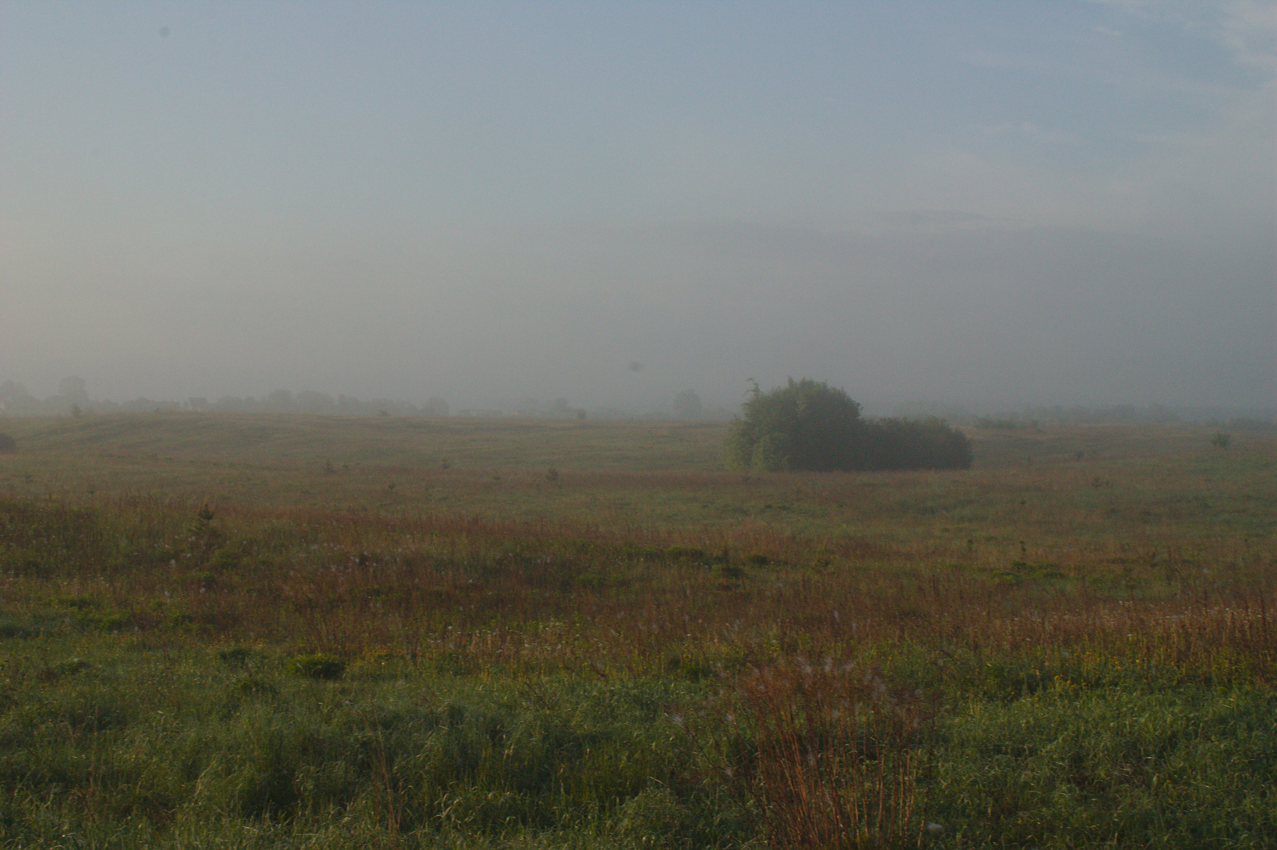 Free stock photo of fog, meadow