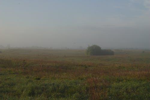 Бесплатное стоковое фото с луг, туман