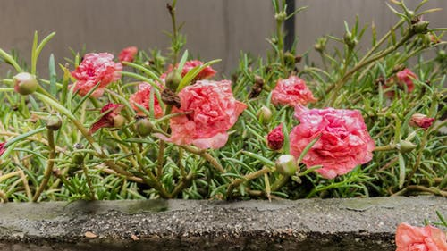 Free stock photo of after the rain, beautiful flowers, floral