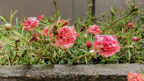 Základová fotografie zdarma na téma krajina, krásné květiny, květinový