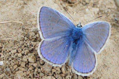 Fotos de stock gratuitas de alas, azul, bonito, delicado