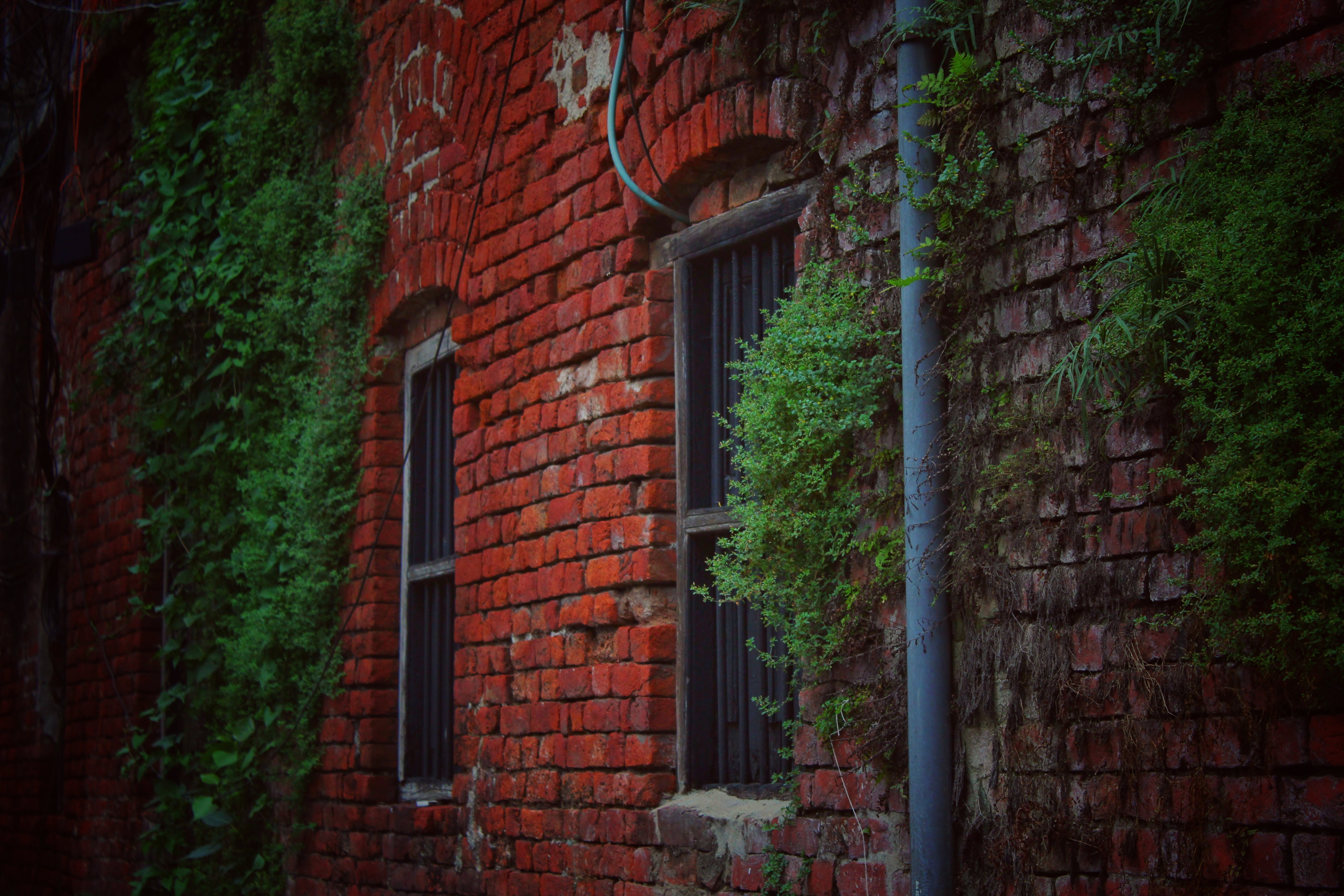 Red Brick House Covered With Green Plants