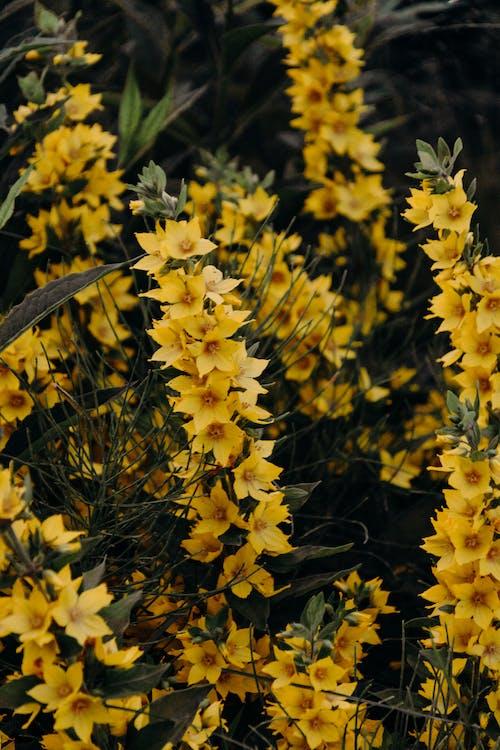 Základová fotografie zdarma na téma flóra, jasný, kvést, květ