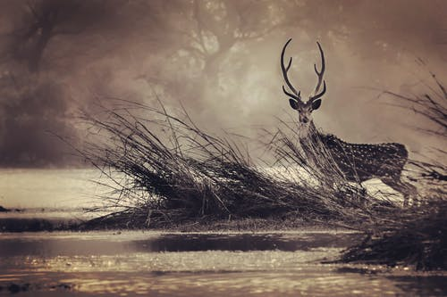 Foto profissional grátis de alvorecer, animais selvagens, animal, bharatpur