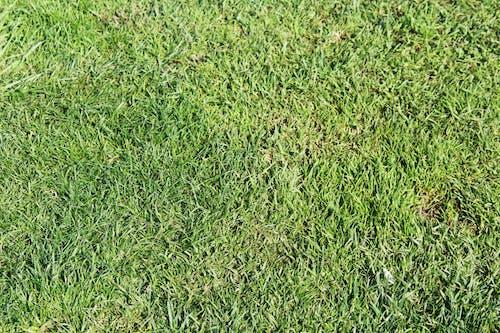 Kostnadsfri bild av gräs, textur