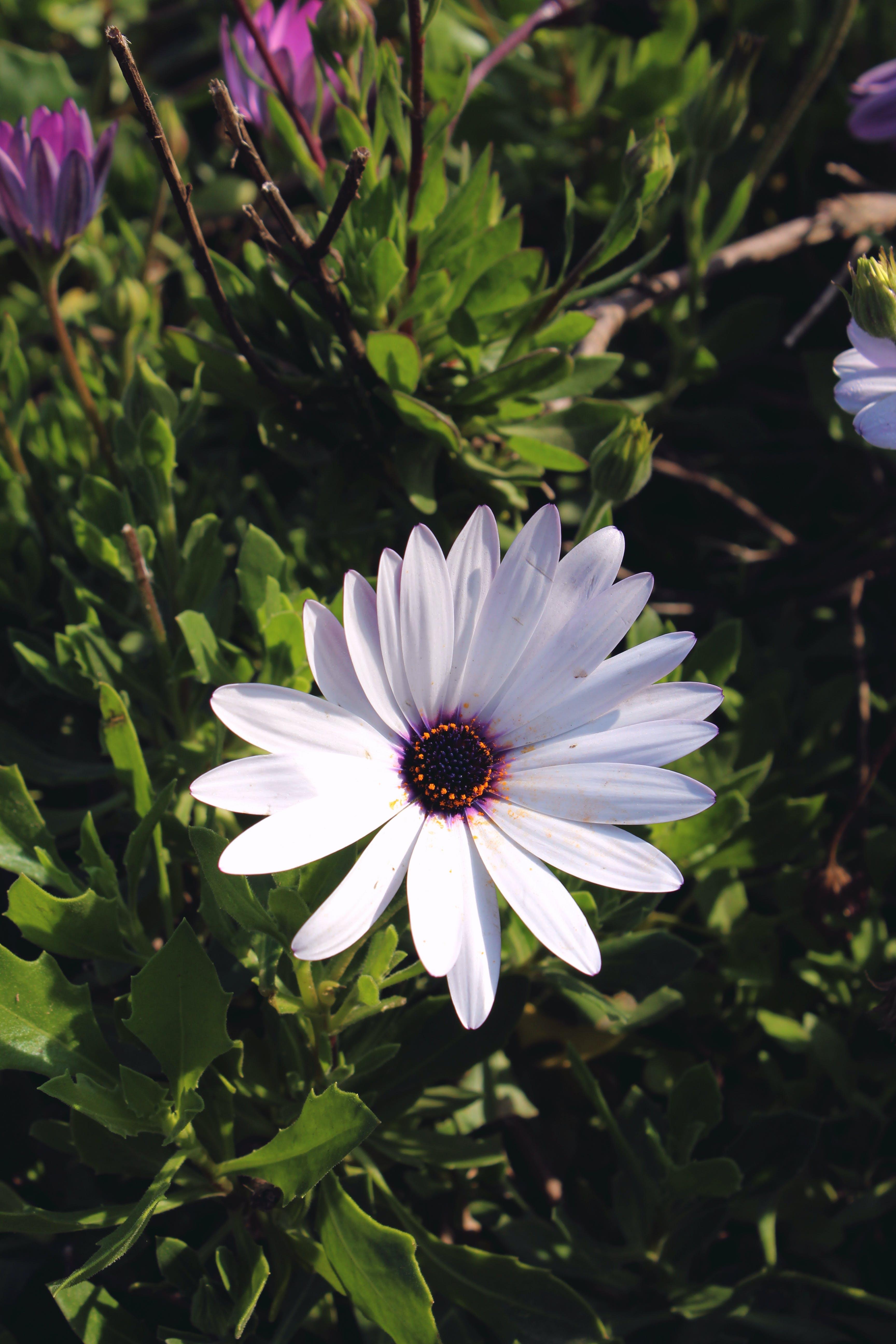 Free stock photo of flower, white flower