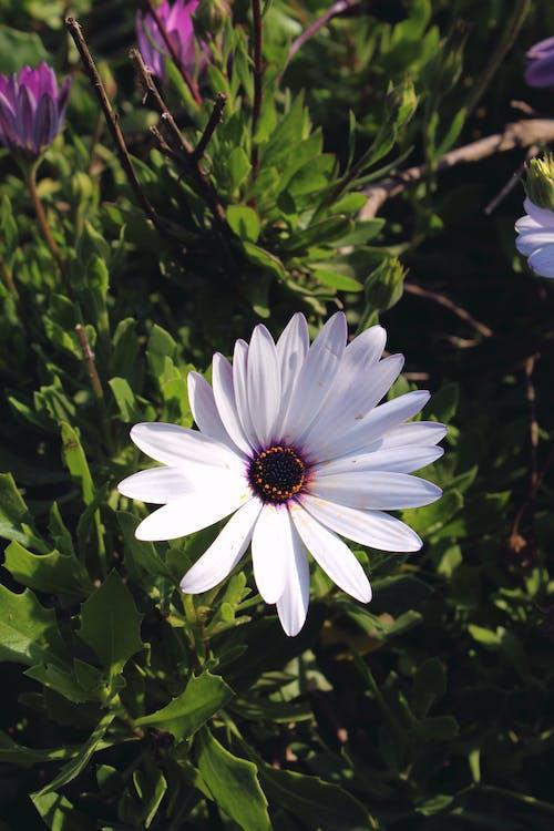 Kostnadsfri bild av blomma, vit blomma