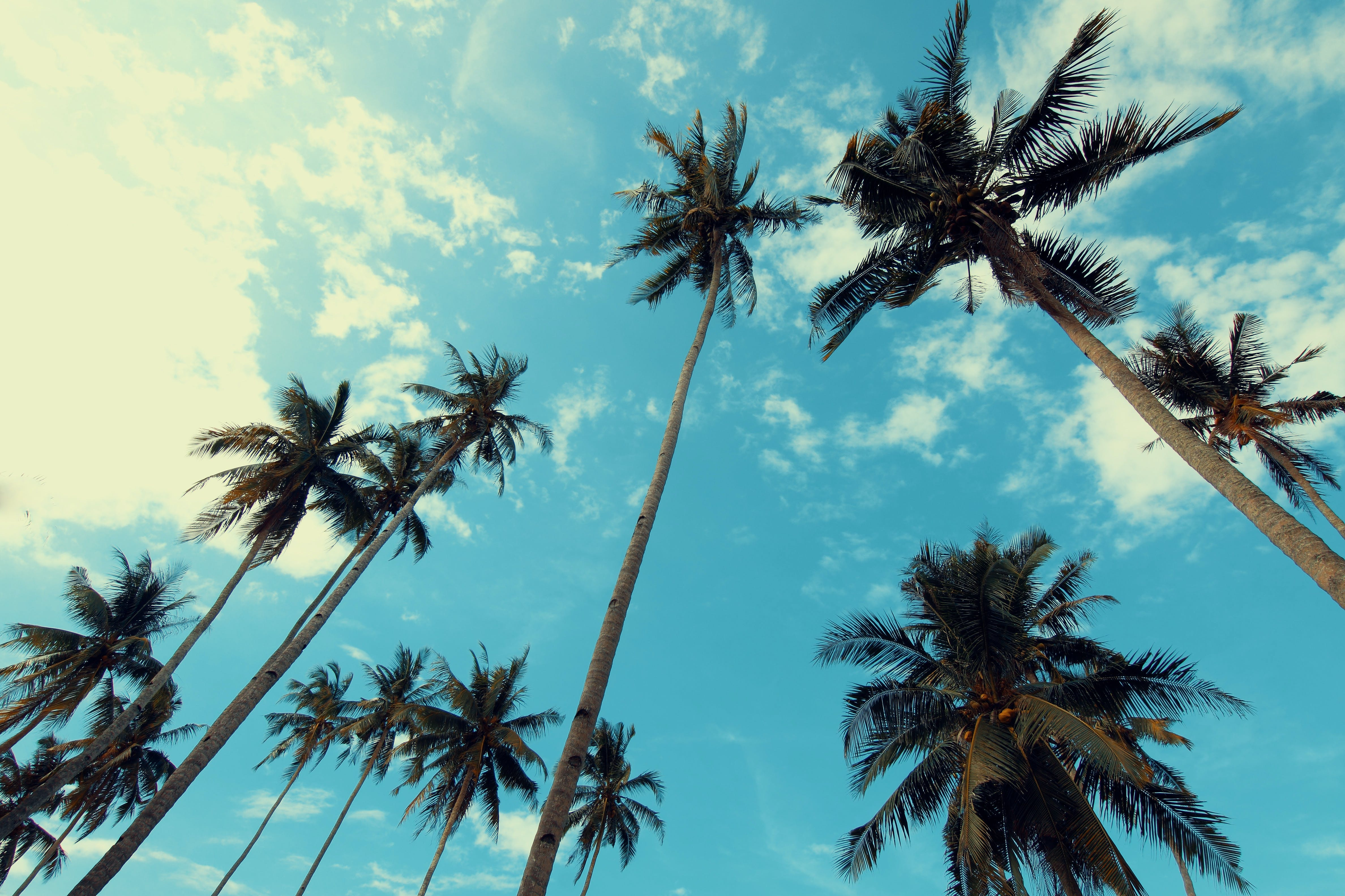 Palm Trees Under Blue Cloudy Sky