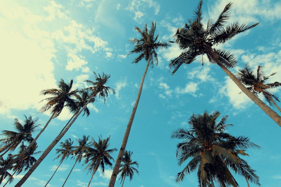 bidikan sudut sempit, langit, musim panas