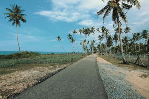 Road Next to Coconut Trees
