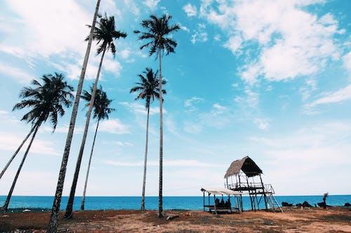 Royaltyfria bilder av dagtid, hav, havsområde, havsstrand