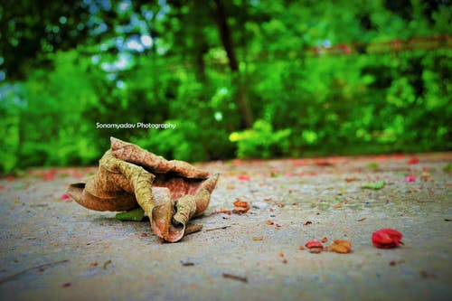 Free stock photo of sonamyadav photography