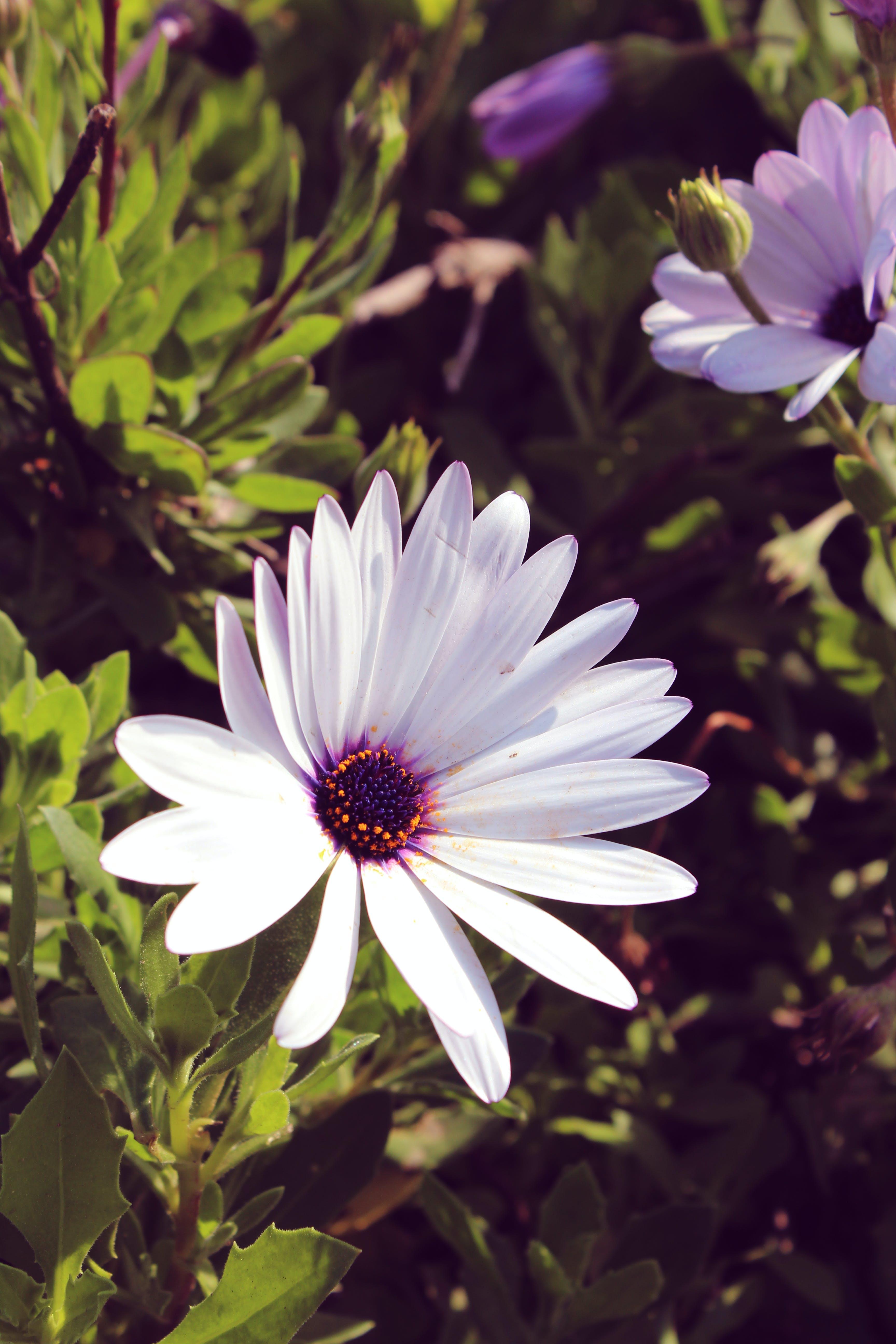Free stock photo of nature, white, white flower