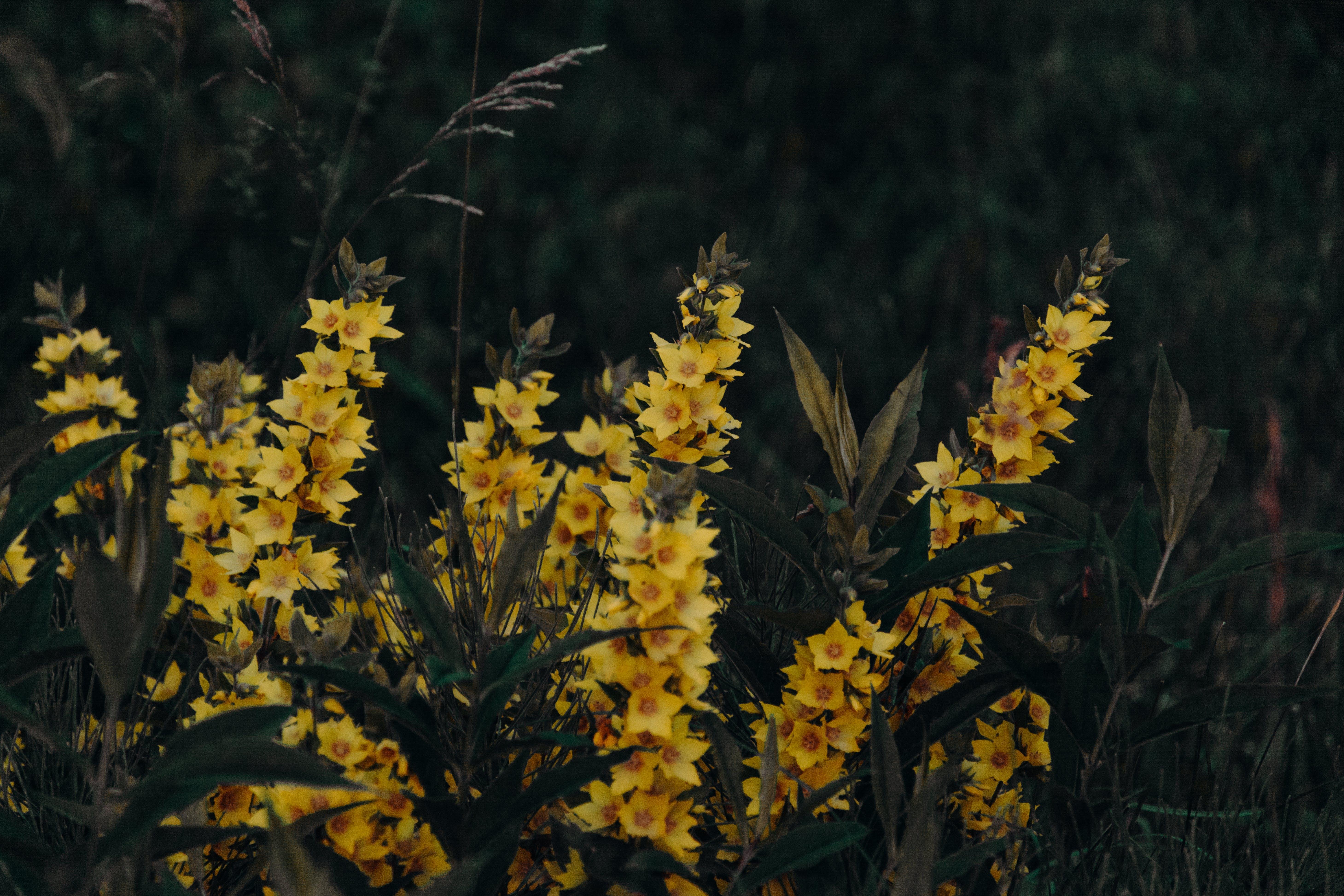 Foto d'estoc gratuïta de arbre florit, bonic, branca, camp