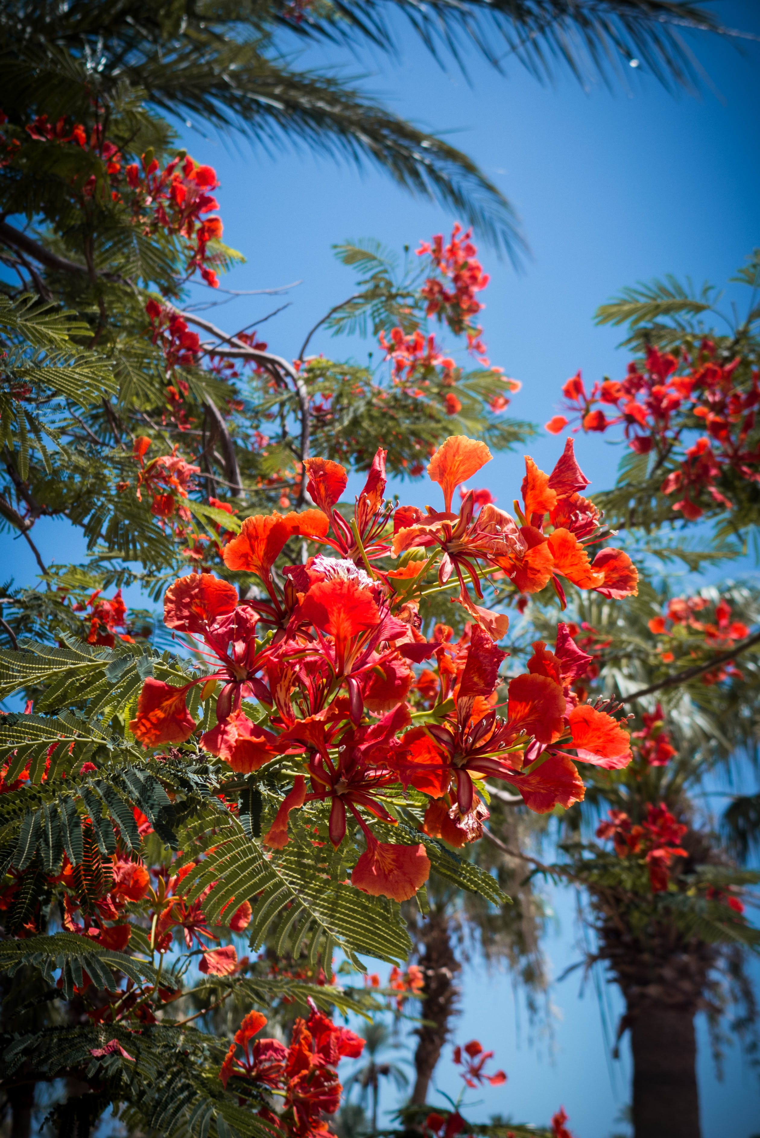 Shallow Focus Photography of Red Flowers With Leaves