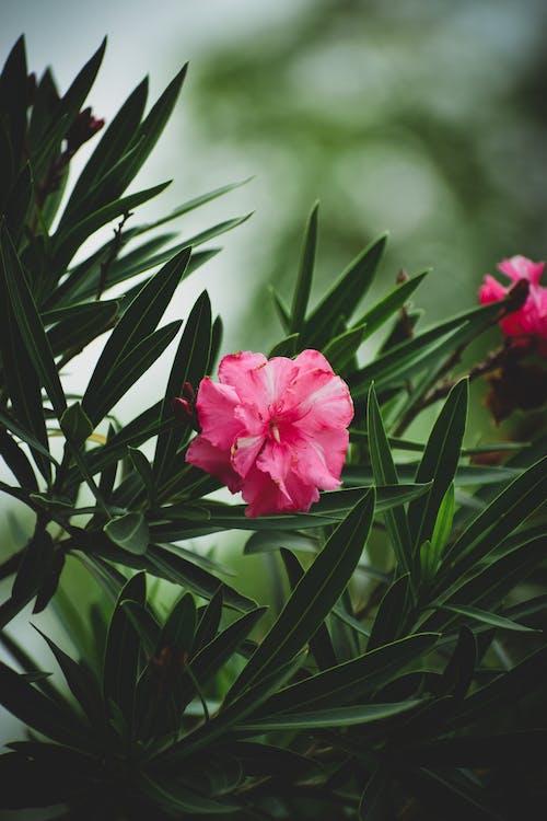 Gratis arkivbilde med blomst, blomster, blomsterblad, blomstre