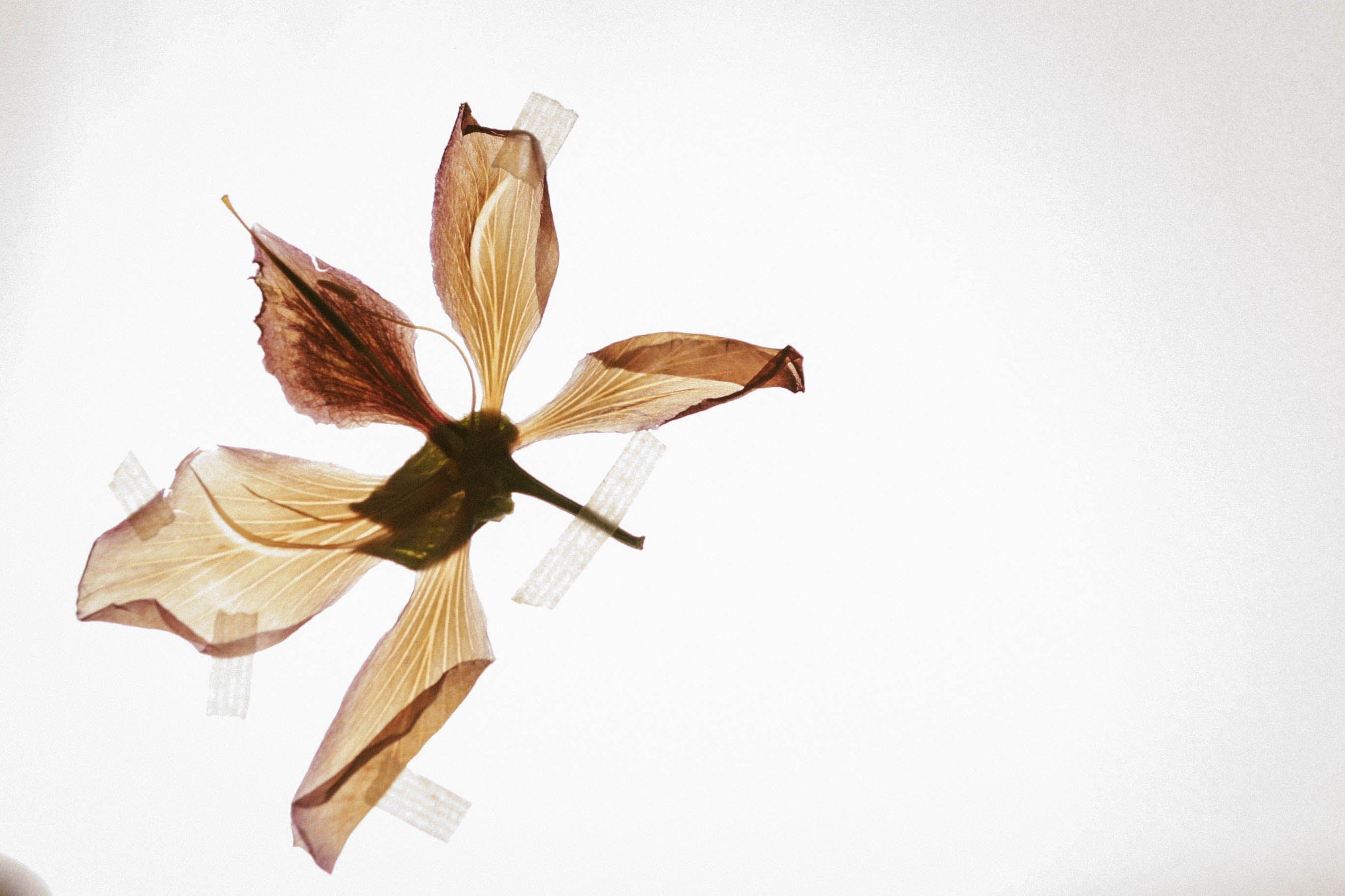 Beige Petal Flower