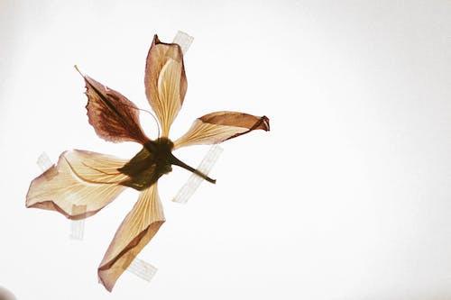 Ảnh lưu trữ miễn phí về cận cảnh, cánh hoa, cuộc sống tĩnh lặng, đẹp