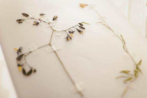 ドライフラワー, フラワーズ, フローラ, 咲くの無料の写真素材