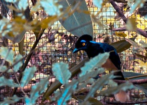 Darmowe zdjęcie z galerii z brazylia, dzika przyroda, siedzący na gałęzi, zwierzę